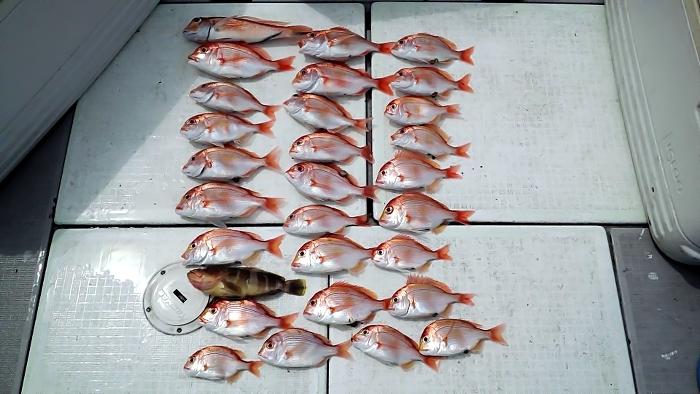 catch53
