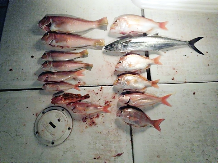 catch64