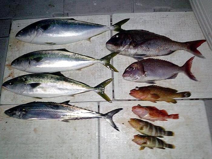 catch71